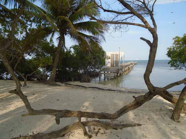 I rather like this shot - nicely framed. It is of an old, abandoned warf, with mangrove trees in the foreground
